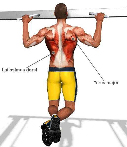 Thefitnessroad Best Back And Lat Workout Lower Upper Exercises For Men