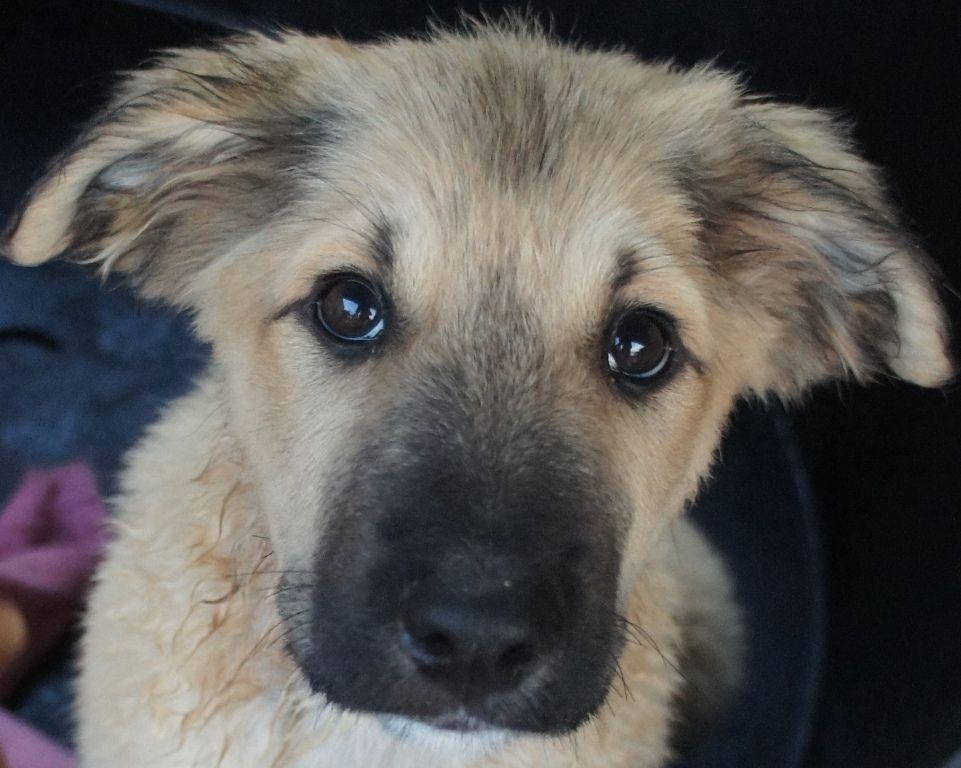 Pin Von Begzada S Auf Hund Tierheim Hunde Tiere