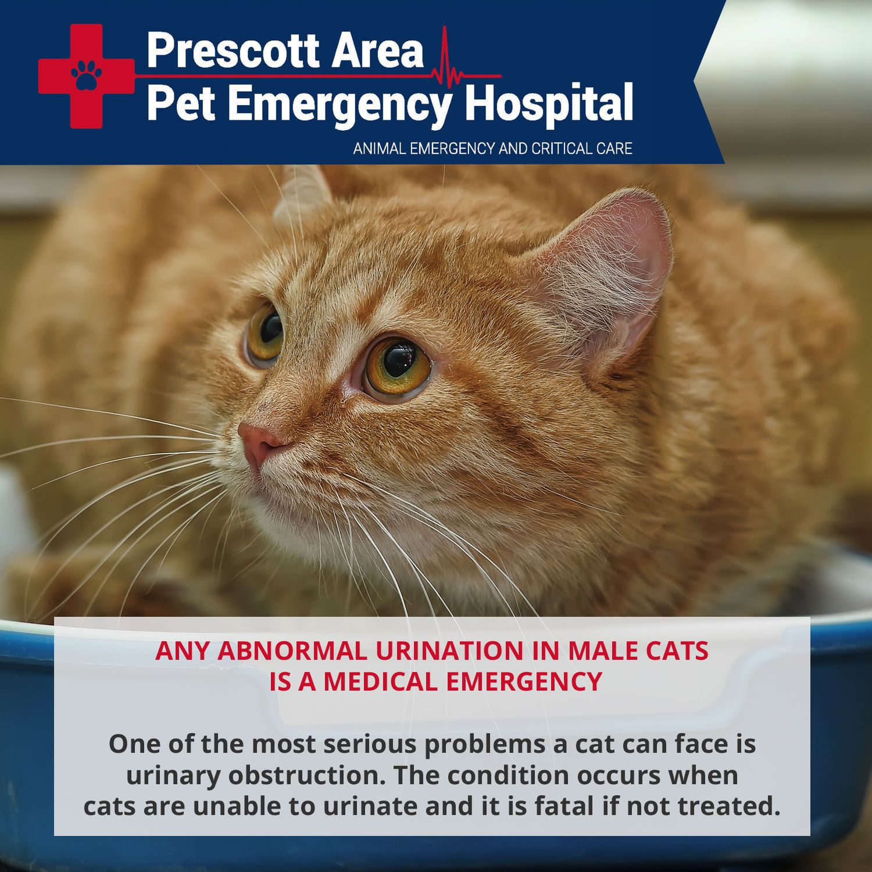 Common Pet Emergencies Pet emergency, Emergency hospital