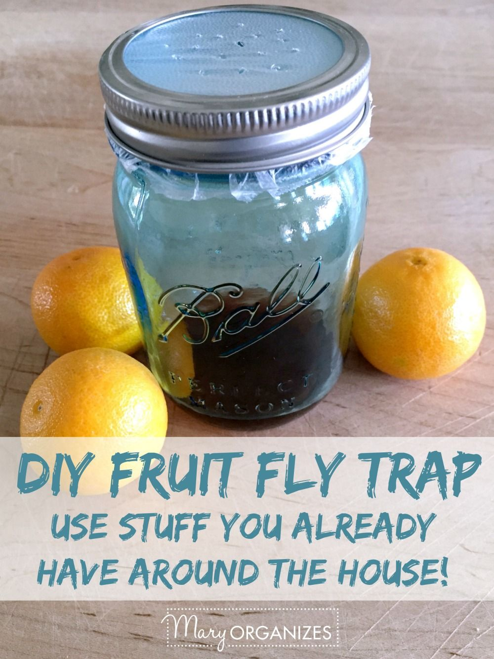 Get Rid Of Fruit Flies For Good Diy fruit fly trap
