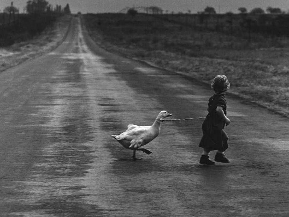 Niña cruzando la carretera con su pato