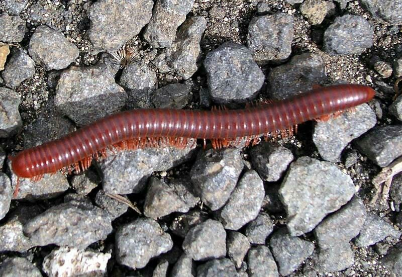 17++ Is a worm an animal images