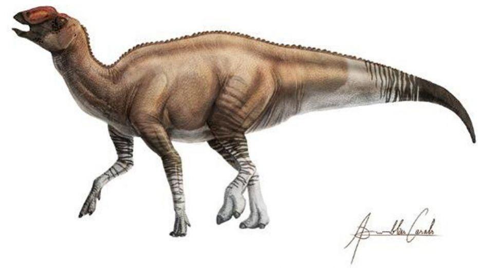 Oaxaca Me Nbspoaxaca Resources And Information Animales Prehistóricos Paleontología Tipos De Dinosaurios