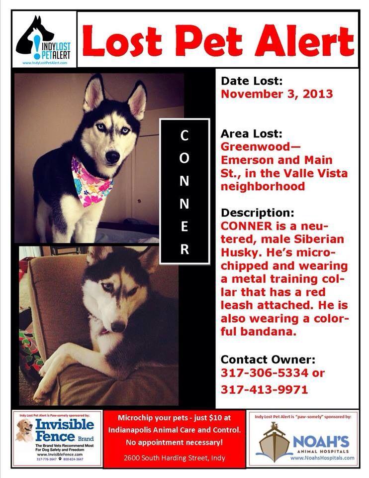 LOSTDOG 11-30-13 #PECANISLAND #LA MALE BLACK #LAB - lost pet poster