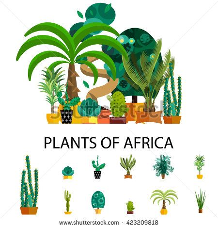 Flat nature of africa vector illustration, outdoor tropical coconut trees for…