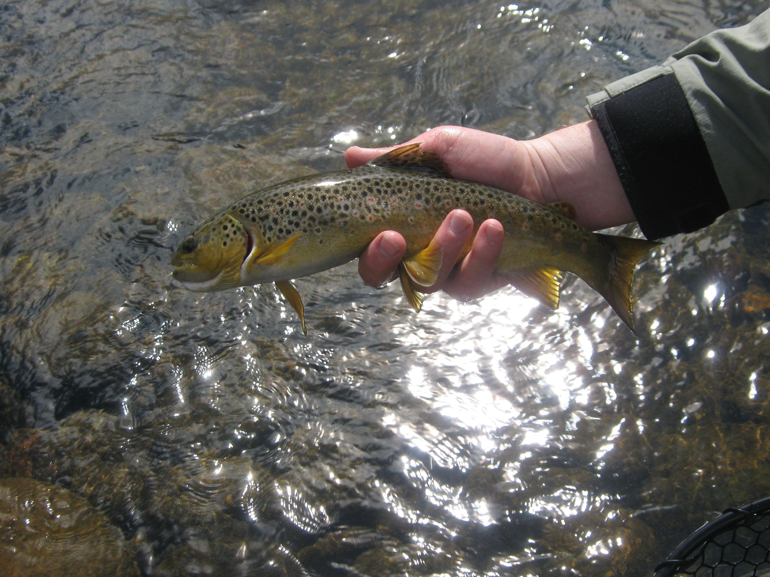 Pin on Utah fishing & hunting