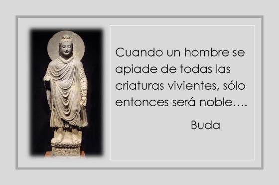 Grandes Frases ( Doctrinas - Budistas / Hindues ) - Taringa! | Memes, Ecard  meme, Ecards