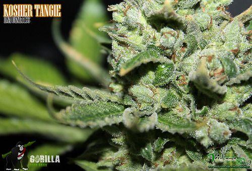 Daily Marijuana Weed Cannabis