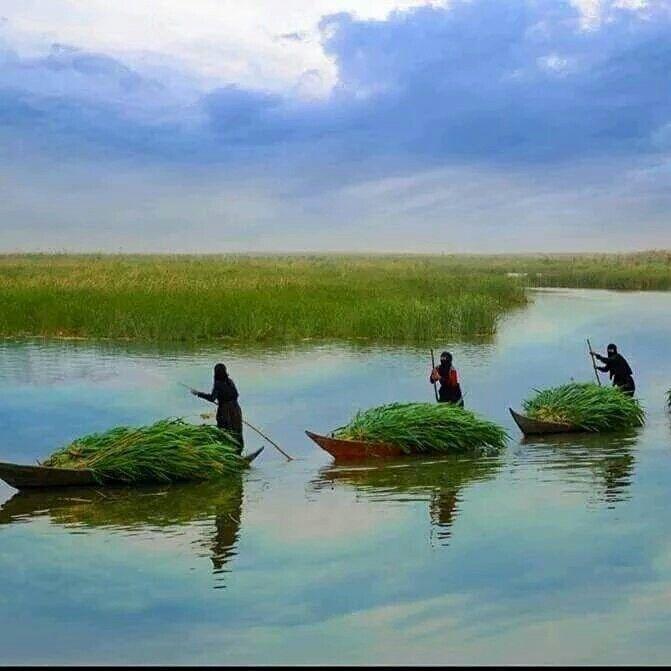 صورة نساء عربيات عراقيات من الاهوار جنوب العراق بعد جمع وتحميل القصب فى القوارب الصغيرة حياة بسيطة بدون تعقيد Iraq Marsh Mesopotamia