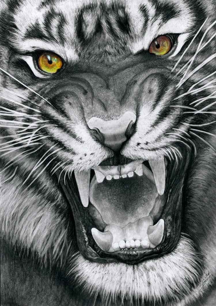 pin de josé carrión em felinos pinterest cor carvão desenho de