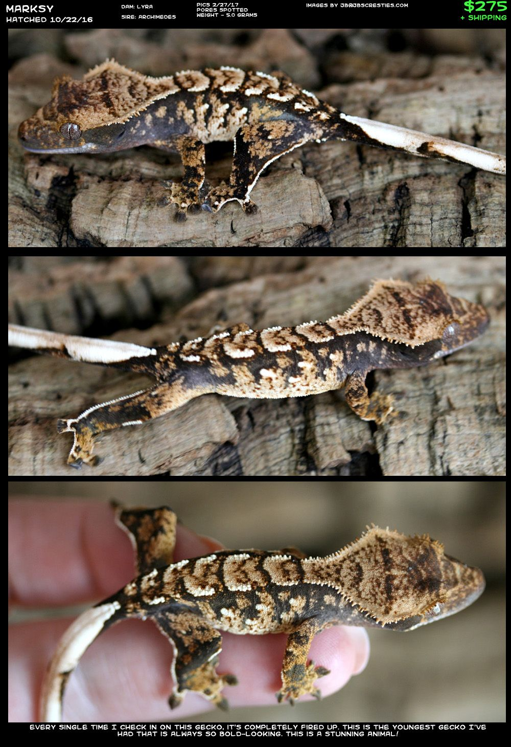 My dream Crested Gecko | Reptilien | Pinterest