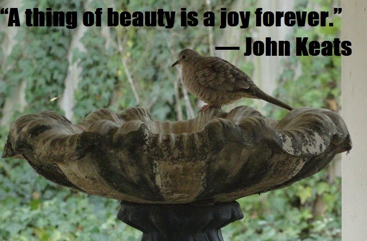 Oh My Freaking Stars!: Joy & Beauty