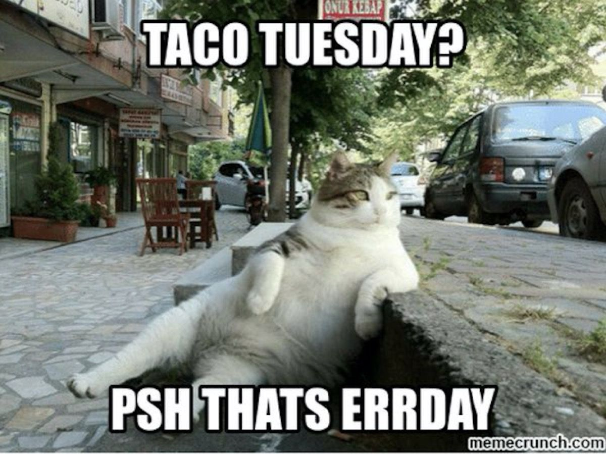 15 Happy Tuesday Memes Best Funny Tuesday Memes Funny Animal Memes Animal Memes Cats