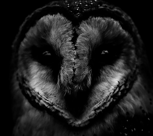IT'S OWL GOOD.