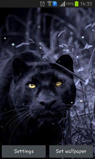 3d Black Panther Wallpaper Beautiful Black Panther Fur