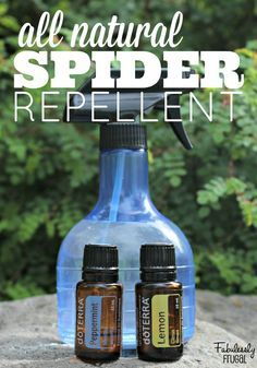 DIY Natural Spider Repellent That Works - Fabulessly Frugal