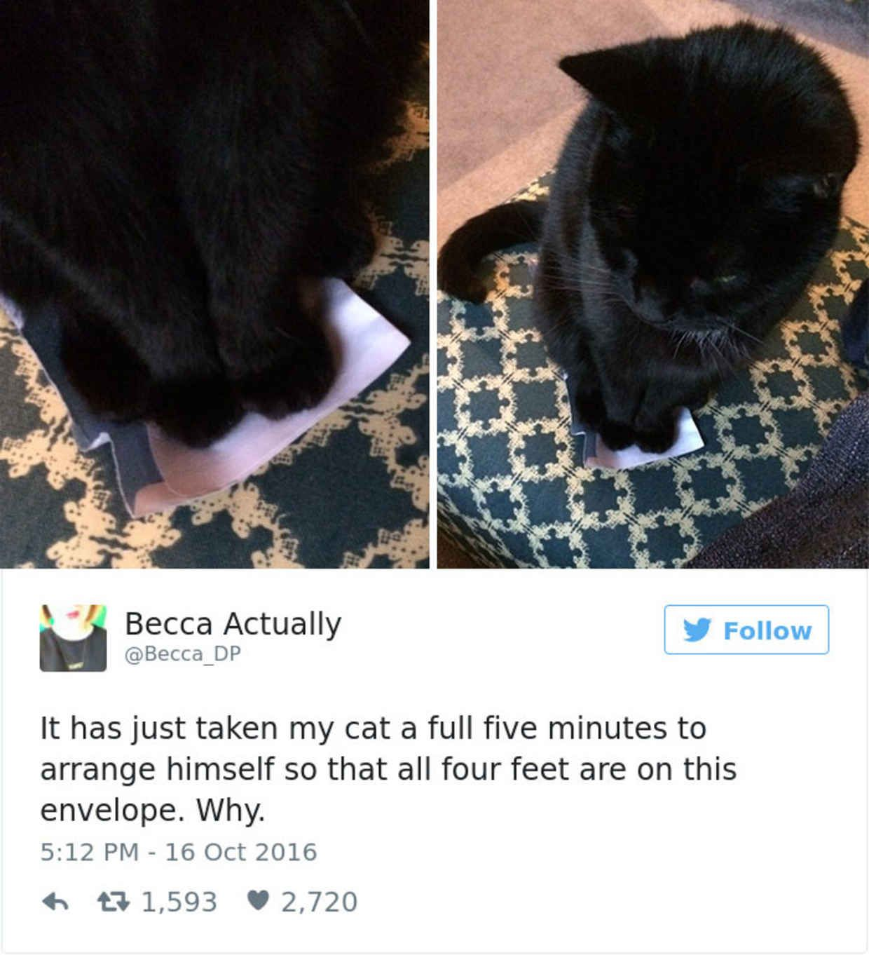 The Funniest Tweets About Cats In The Funniest Cats And - The 27 funniest tweets about cats in 2016