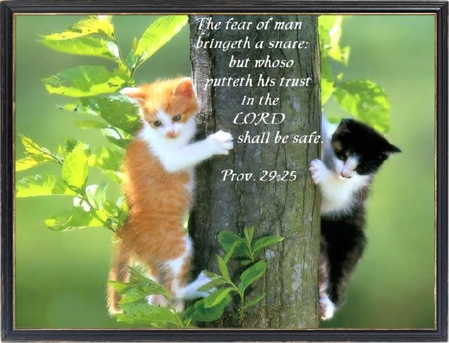 Prov 29 25 Trust The Lord And Be Safe Funny Cute Cats Kittens Cutest Cat Wallpaper