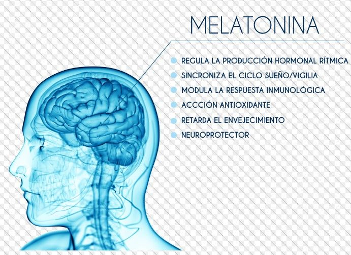 melatonina pregnancy perder peso