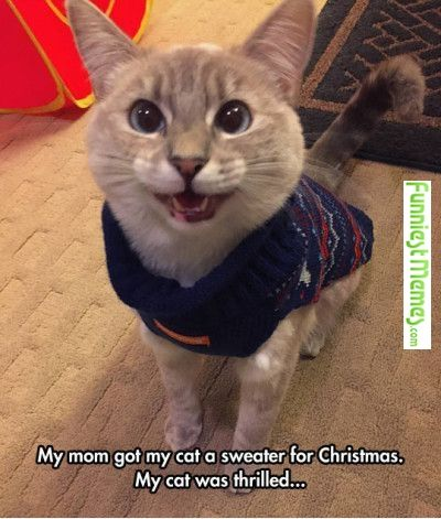 Funny Memes - [My Mom Got My Cat A Sweater For Christmas ...