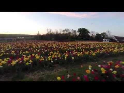 Burnside Farms