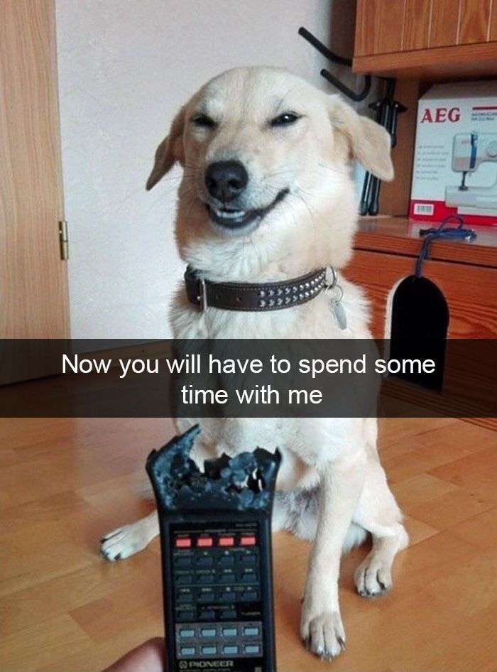 Hilarious Animal Snapchats Guaranteed To Make You Laugh Out - This dog has some serious self control that will make you laugh