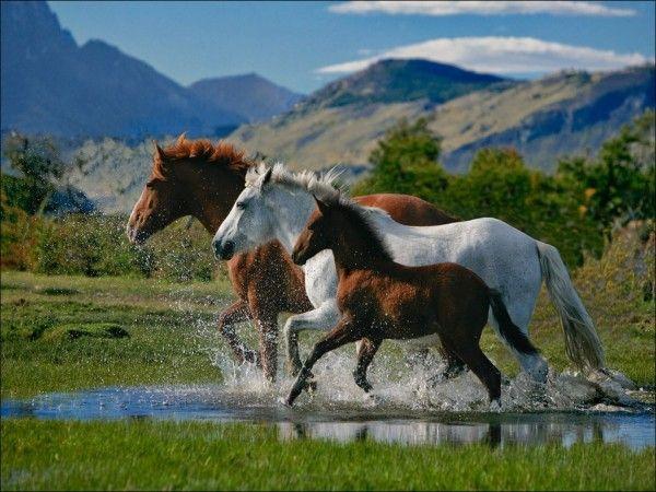 Las Mejores Fotos De Caballos Corriendo Agua Photography