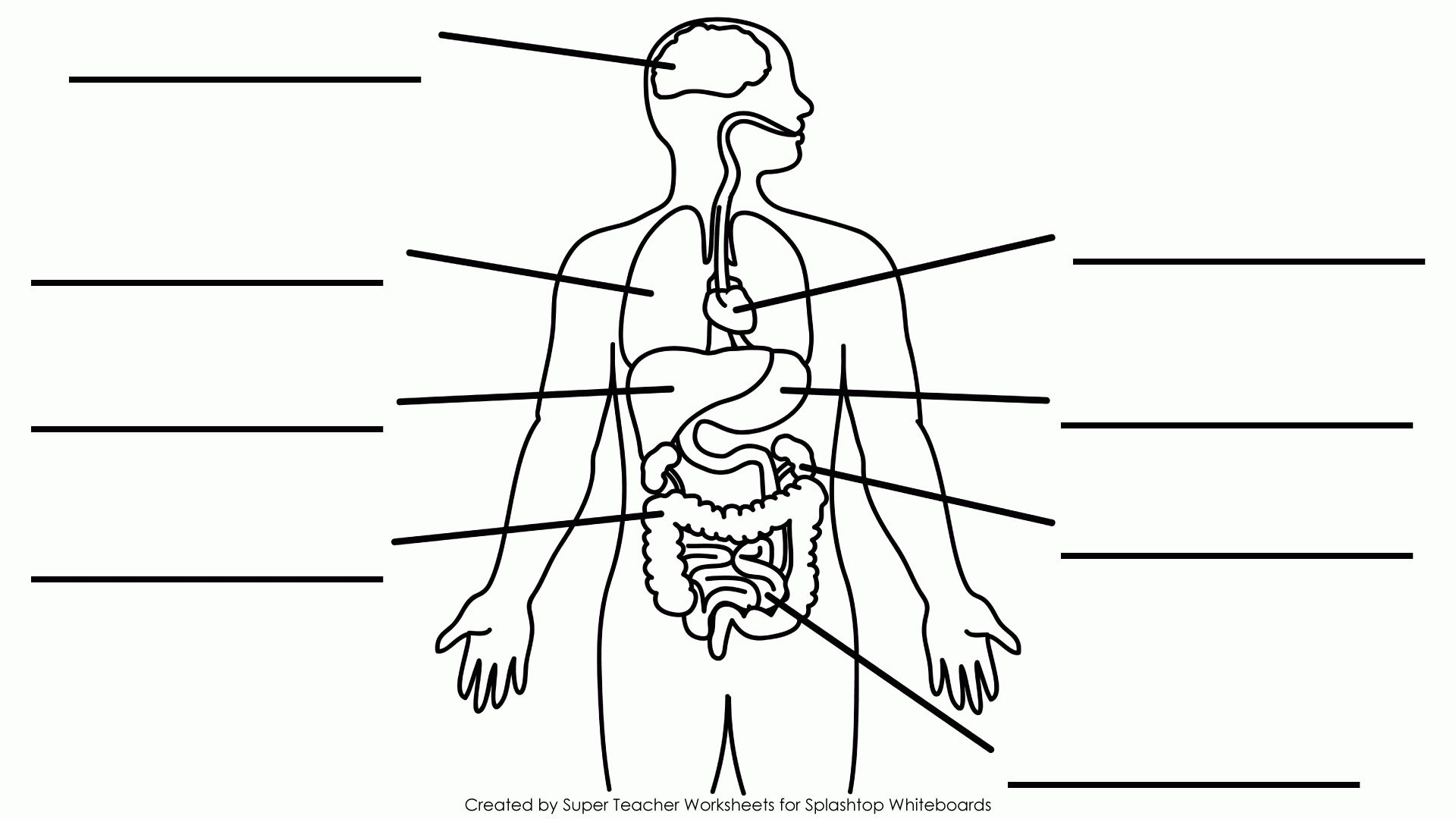 small resolution of simple body diagram wiring diagram show simple body diagram organs