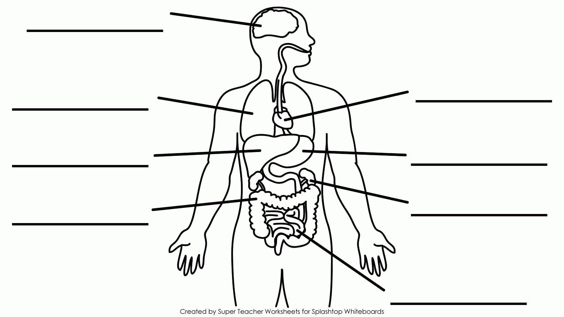 medium resolution of simple body diagram wiring diagram show simple body diagram organs