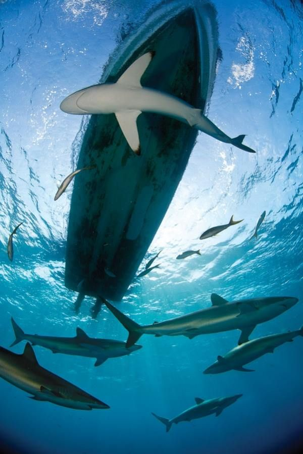 sharky,,,