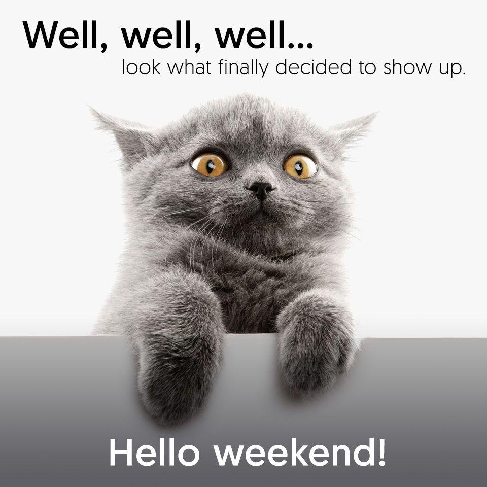 Friday Funnies Hello Weekend Hello Weekend Hello Weekend Funny Friday Humor