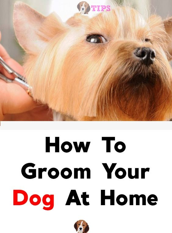 How To Groom Your Dog At Home Dog cleaning, Your dog, Dogs