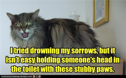 i washed my paws in the toilet - Bing Images