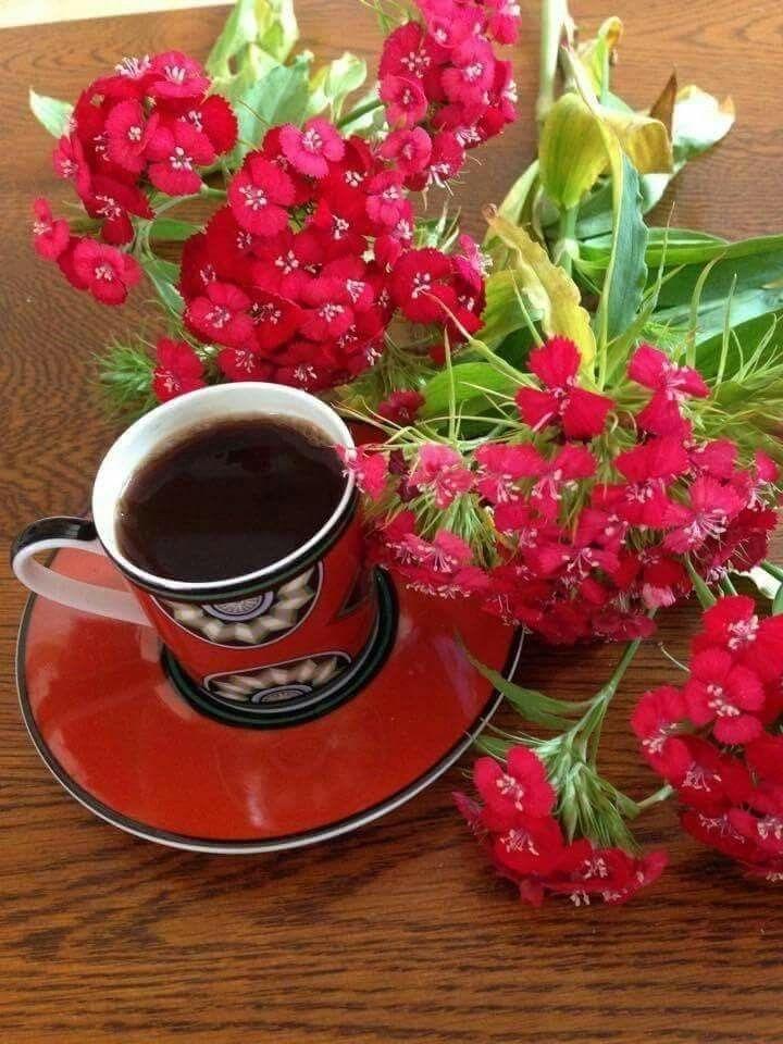 Pin de mildred Tejada em Para saludos Bom dia com flores