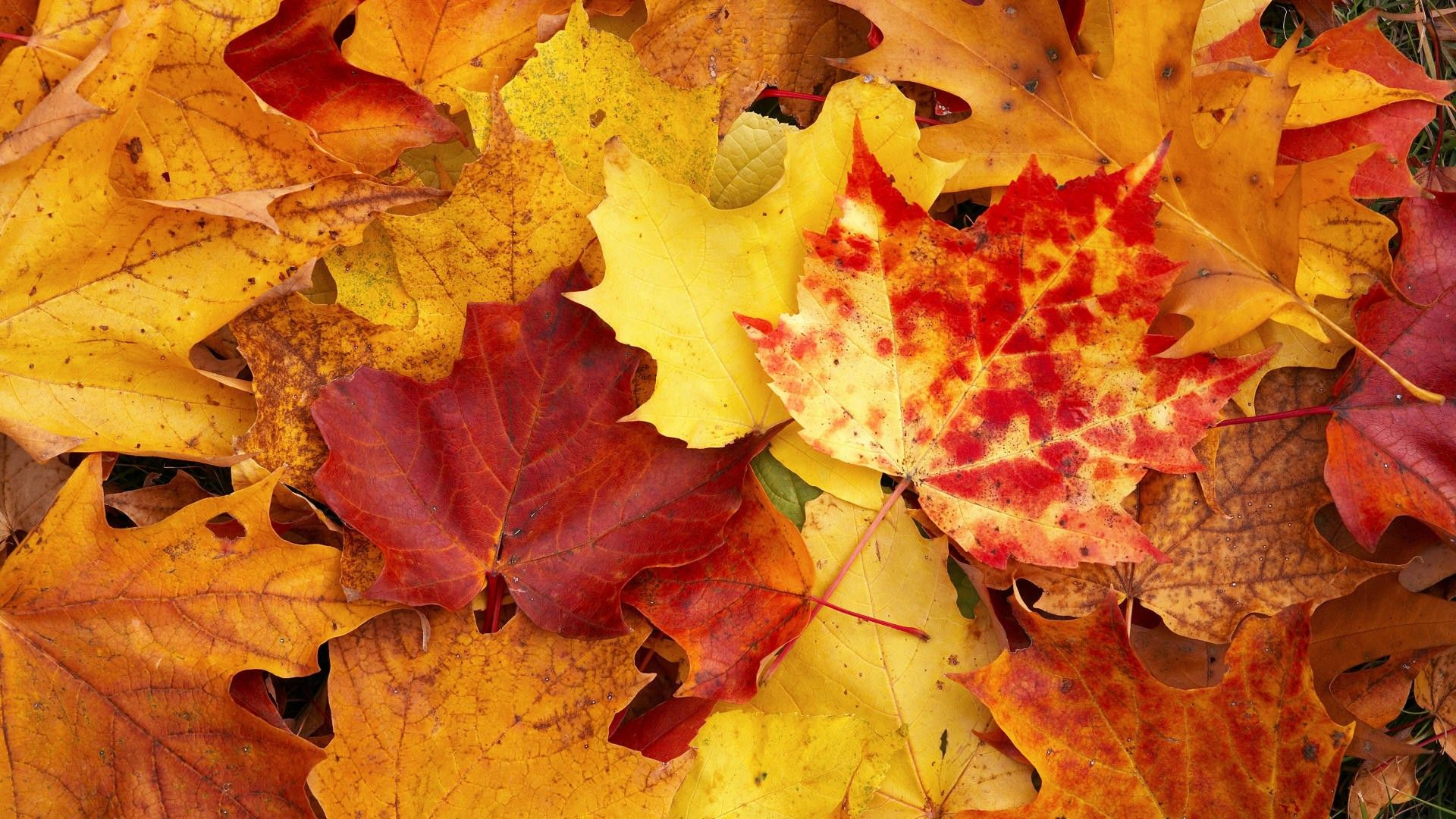 Autumn Leaves Photography Wallpaper HD Resolution with High