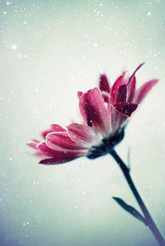 art, close up, color, flakes, flower, flowers