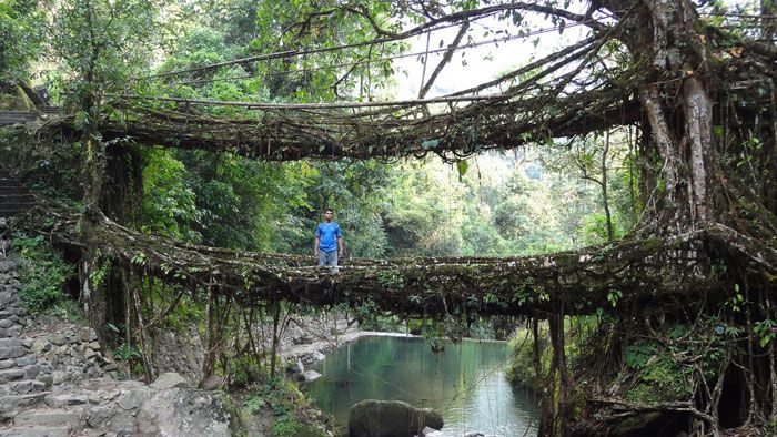 Living root bridge, Cherrapunji, India