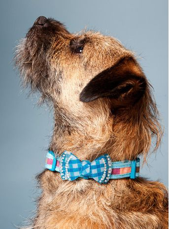 Must see Terrier Bow Adorable Dog - 74b4a14c0bba473c3e51a2e44127f538  You Should Have_784257  .jpg