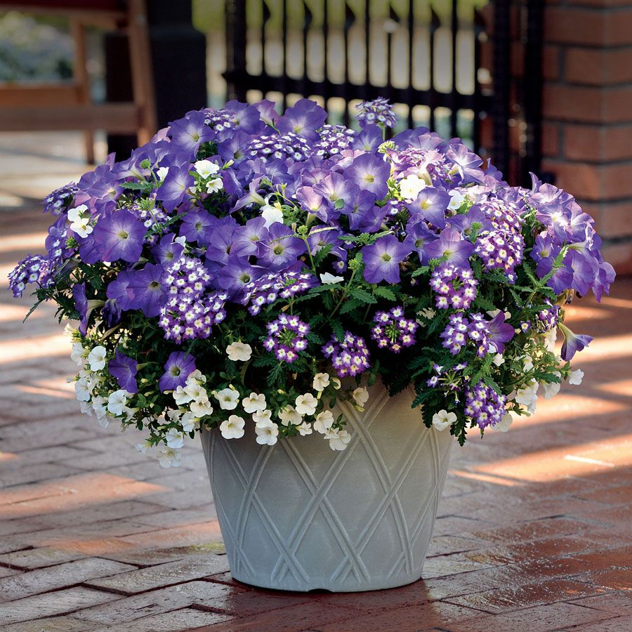 87995 Pk 3 Jpg Container Flowers Annual Plants Petunias