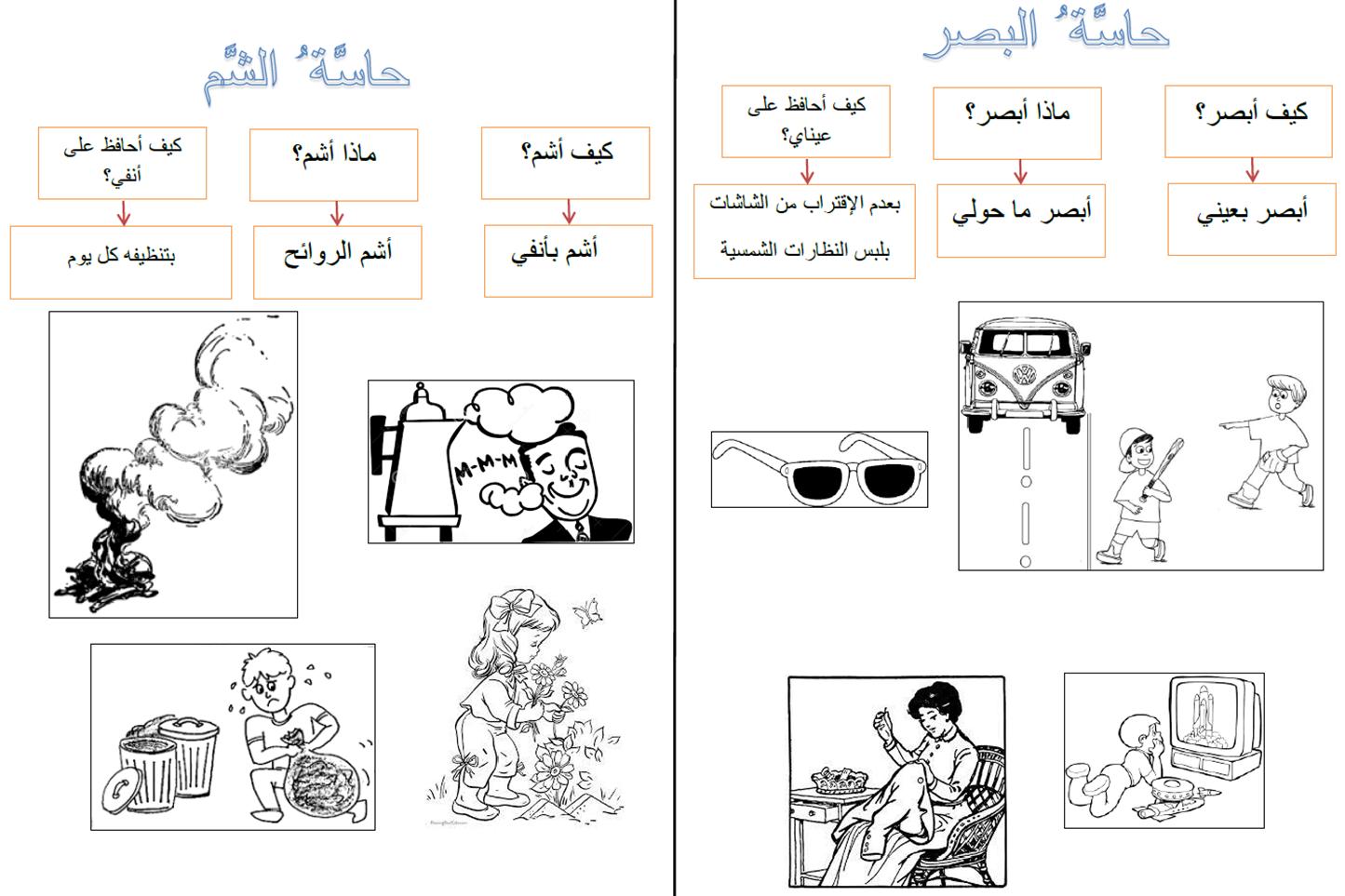 The Five Senses In Arabic Lesson Exercises P3 4