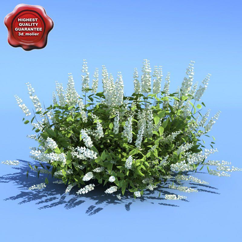 clethra alnifolia hummingbird 3d model 3d model, Design art