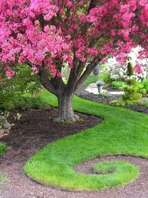 """Love this...check out the other pictures and how the walkway ties in, etc._Pinner says: """"The tree is a Royalty Flowering Crabapple_about 30 yrs old...in the winter the Cedar Wax Wings arrive in huge flocks to clean the old apples off...I love this tree:)"""""""