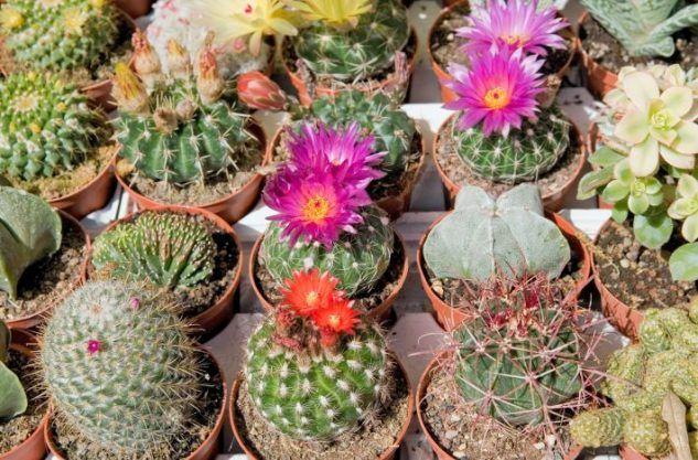 Ideas Creativas Jardines de Cactus | Gardens