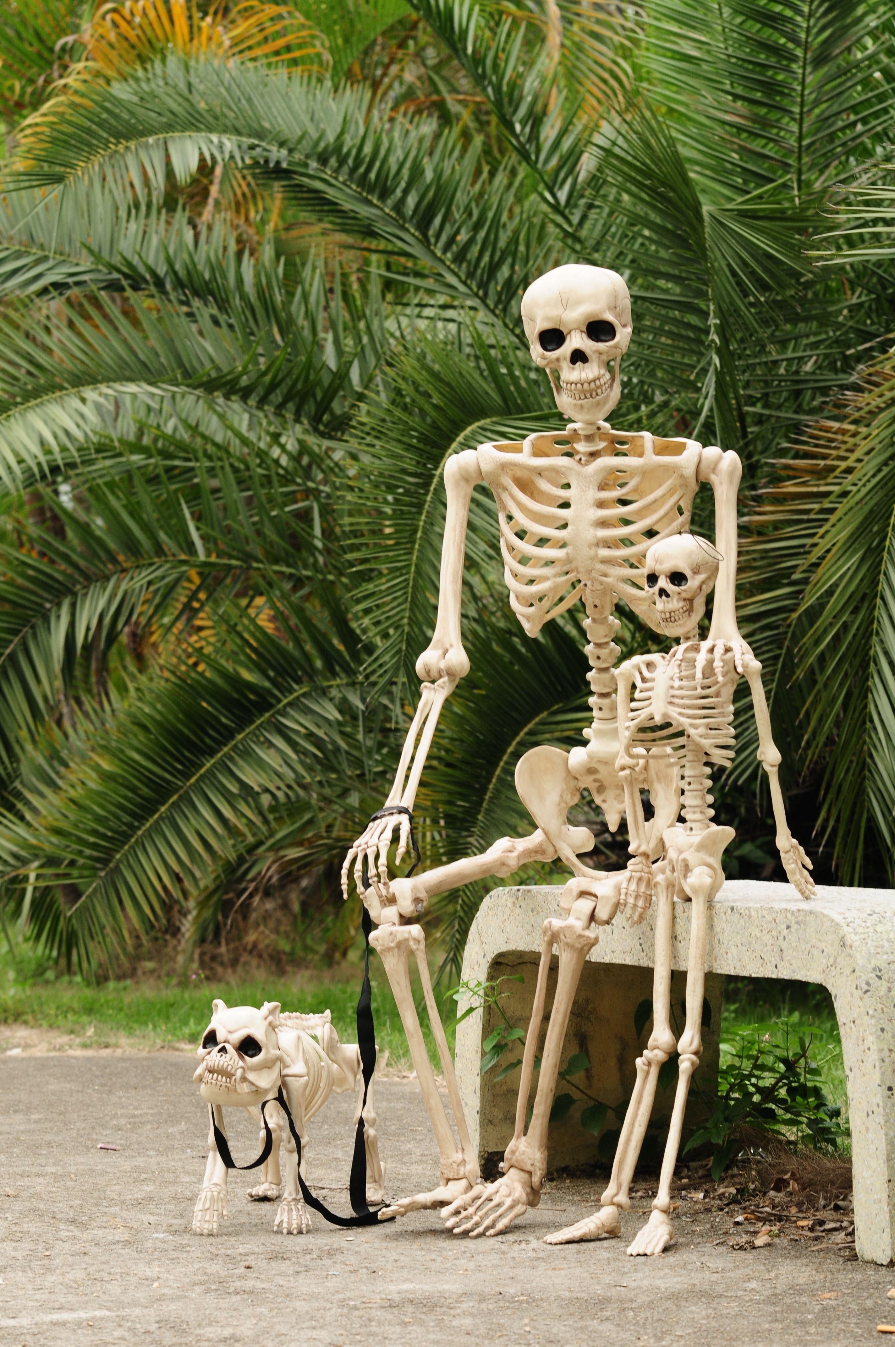 20++ Halloween yard decorations dog skeleton ideas in 2021