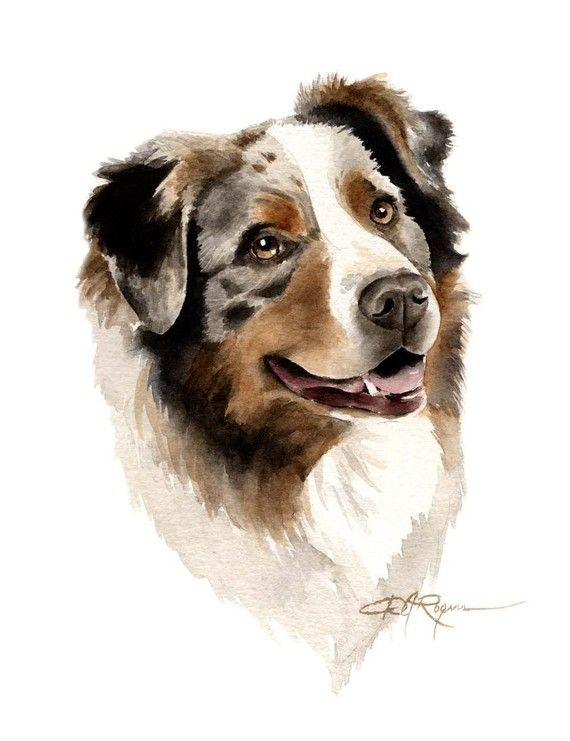 Australian Shepherd Art Print By Watercolor Artist Dj Rogers In