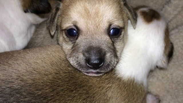 Yogi And Susie Were Amongst The Thousands Of Dogs Living In Fear And Hunger In The Streets Of Los Angeles Ca These Two Sw Chihuahua Rescue Chihuahua Puppies