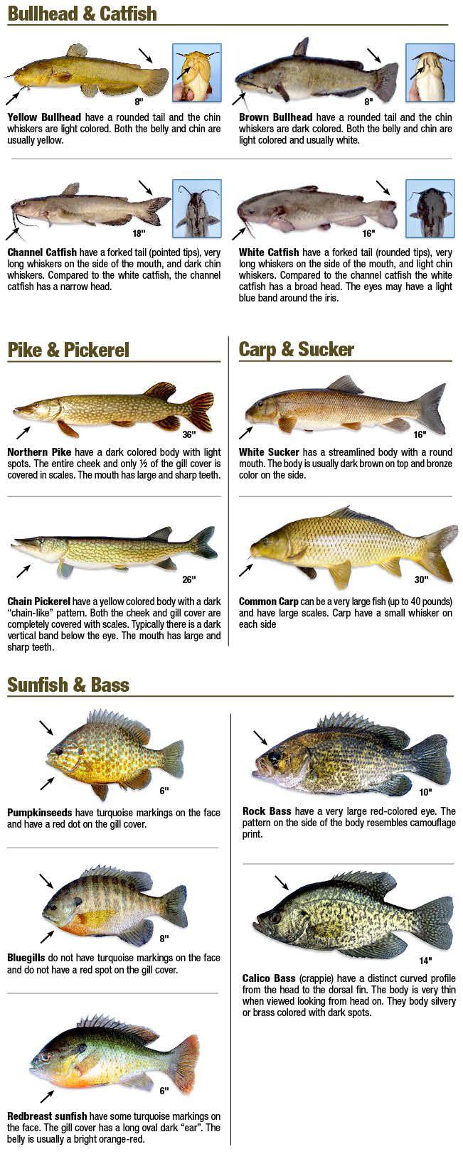 43060 Jpg 651 1623 Fishing Tips Fish Saltwater Fishing