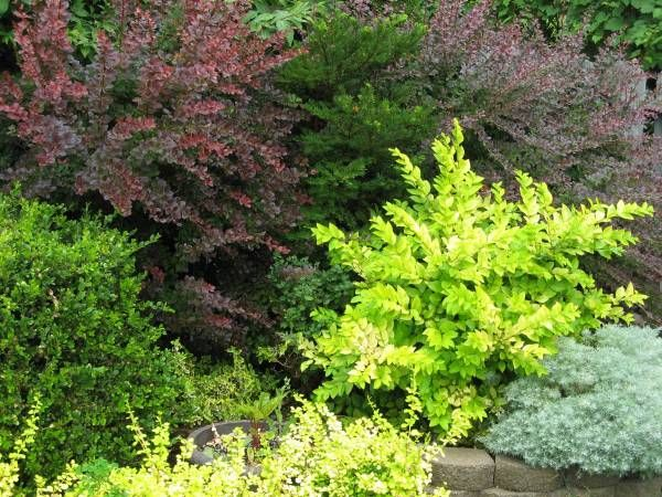 Good Three Simple Tips For A Beautiful Ornamental Garden Bed   Backyard  Gardening Blog