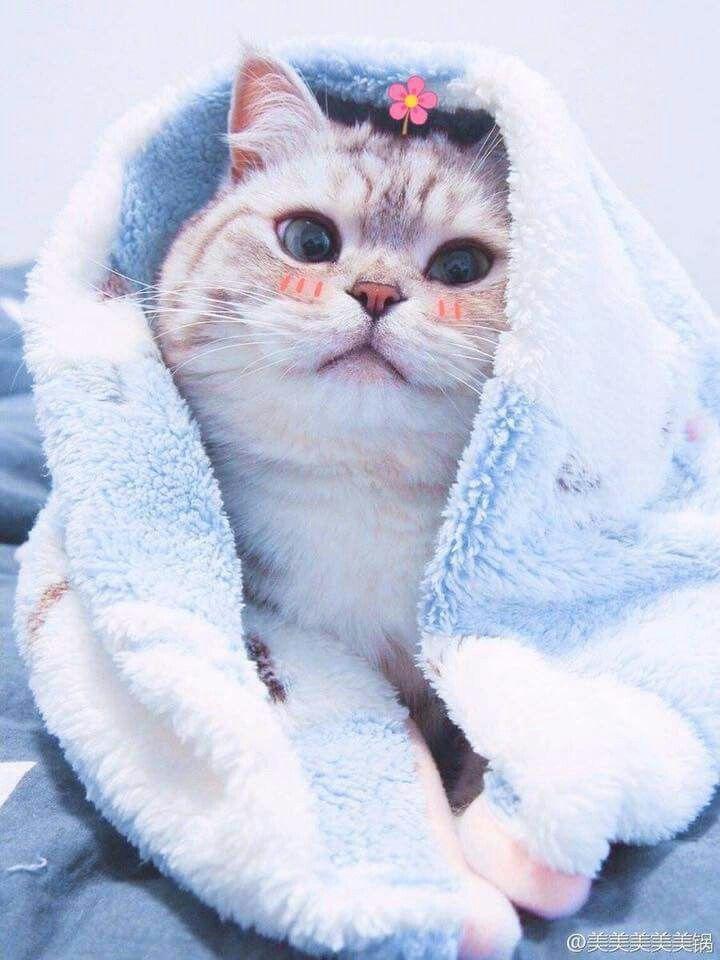 Follow Minh Nha Follow Me ล กแมว แมว ส ตว