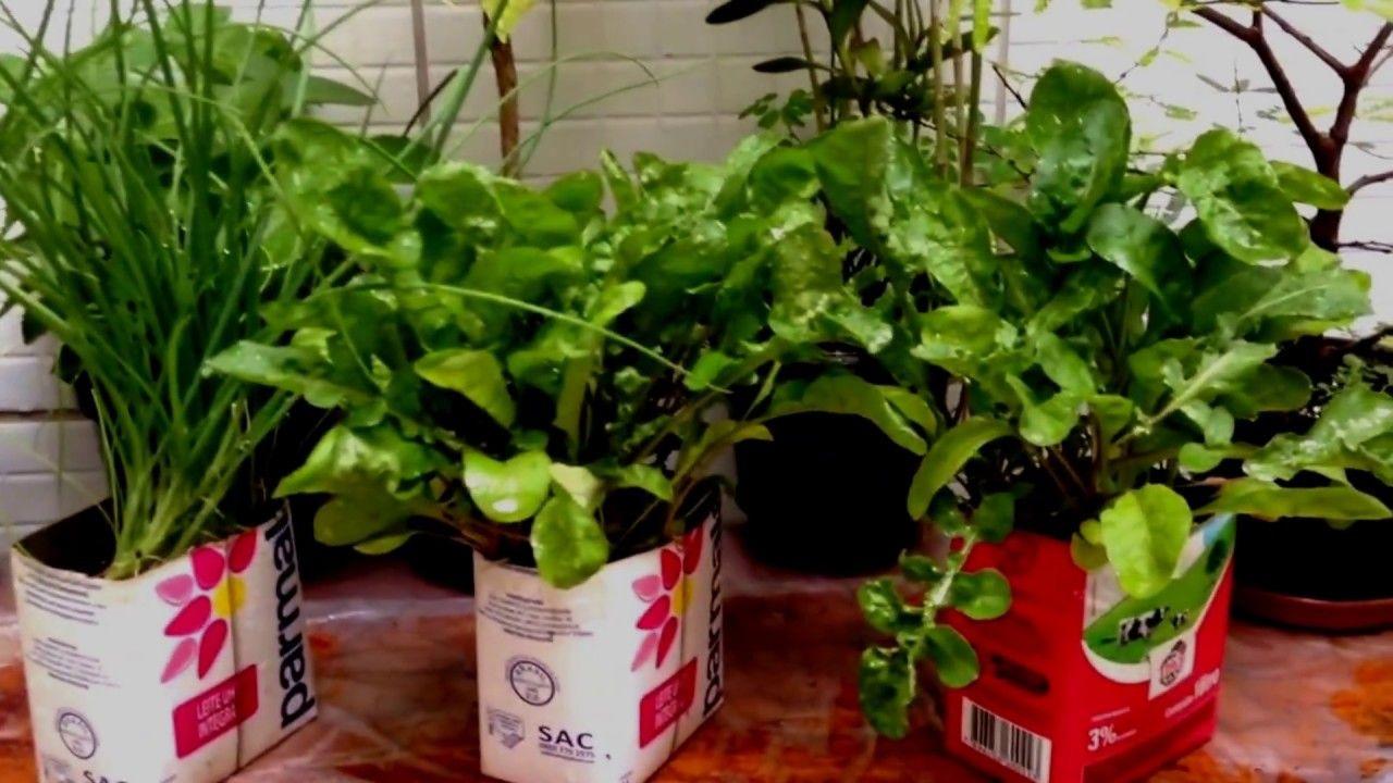 Conhecido Mini Horta-Como Plantar Alface, Rúcula e Cebolinha Reciclando  JF39